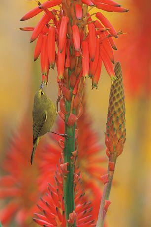 Подборка лучших фото дикой природы за 2008 год, цветочек и птичка