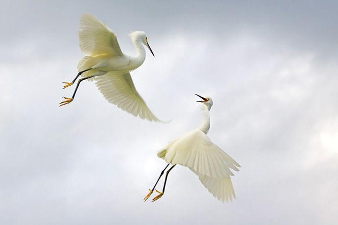 Подборка лучших фото дикой природы за 2008 год, аисты