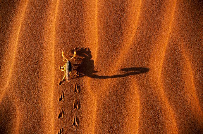 Подборка лучших фото дикой природы за 2008 год, скорпион