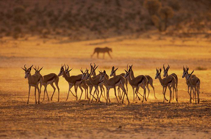 Подборка лучших фото дикой природы за 2008 год, хз кто это )