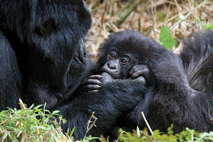 Подборка лучших фото дикой природы за 2008 год, обезьяны