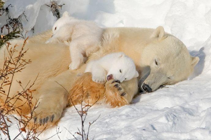 Подборка лучших фото дикой природы за 2008 год 28