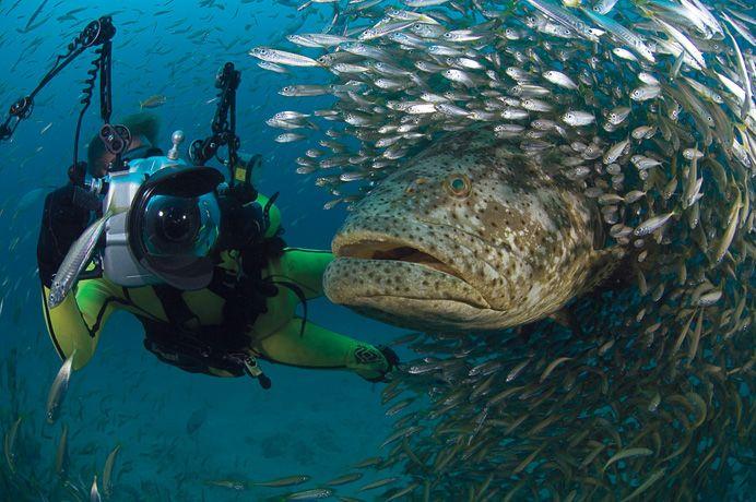Подборка лучших фото дикой природы за 2008 год, подводный мир