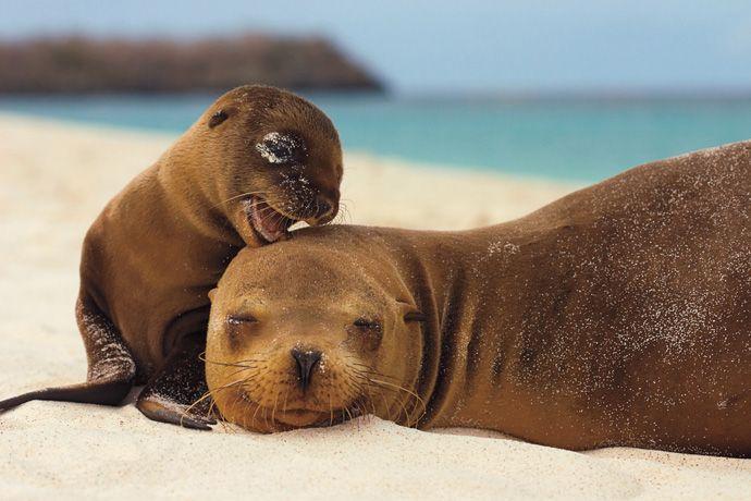 Подборка лучших фото дикой природы за 2008 год, тюлени