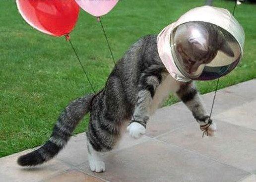 pierwszy_kot_w_kosmosie